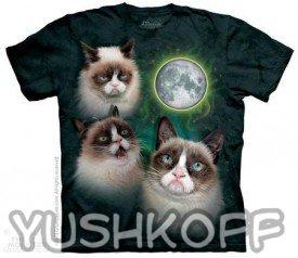 Коллаж знаменитого угрюмого кота из США